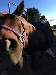 Horse loves girl