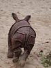 Rennhörnchen gibt Fersengeld (Wilhelma)