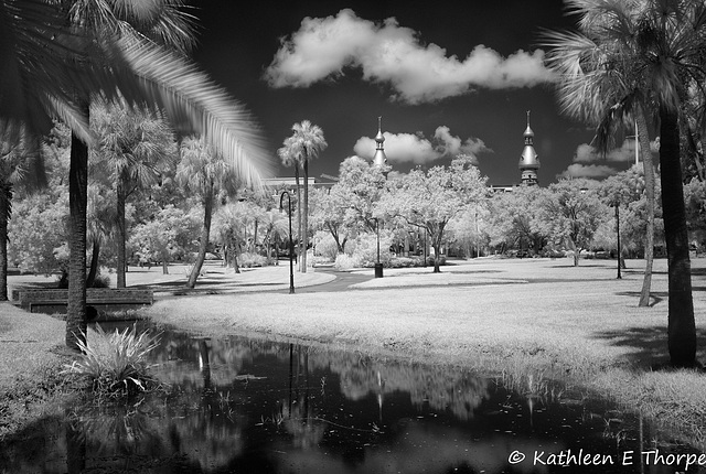 University of Tampa Infrared 004