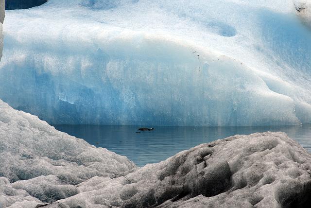 Ice blues, Vatnajökull , Jökulsárlón