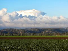 Strawberry Fields & Coastal Fog