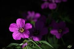218/366: Purple Beauty