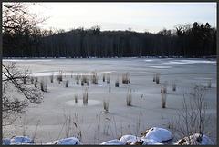 l' hiver en forêt de compiègne ....