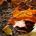 Automne - Autumn 1 / 9