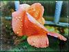 Jour de pluie .........! Bonne semaine à tous