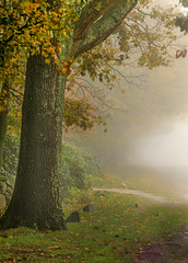 Autumn Fog in Rhode Island  tsc challenge trees