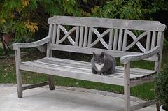 Chat gris sur un banc gris par un matin gris
