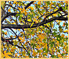 Leaves Above.