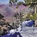 Pining Away – Grand Canyon Village, Grand Canyon, Arizona