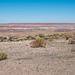 The painted desert12