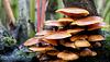 The World of Fungi