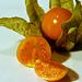 MM2.0 - Früchte:  Physalis