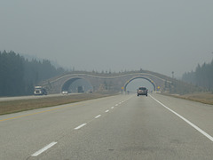 Wild animal bridge over highway