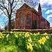 Tempzin Daffodils