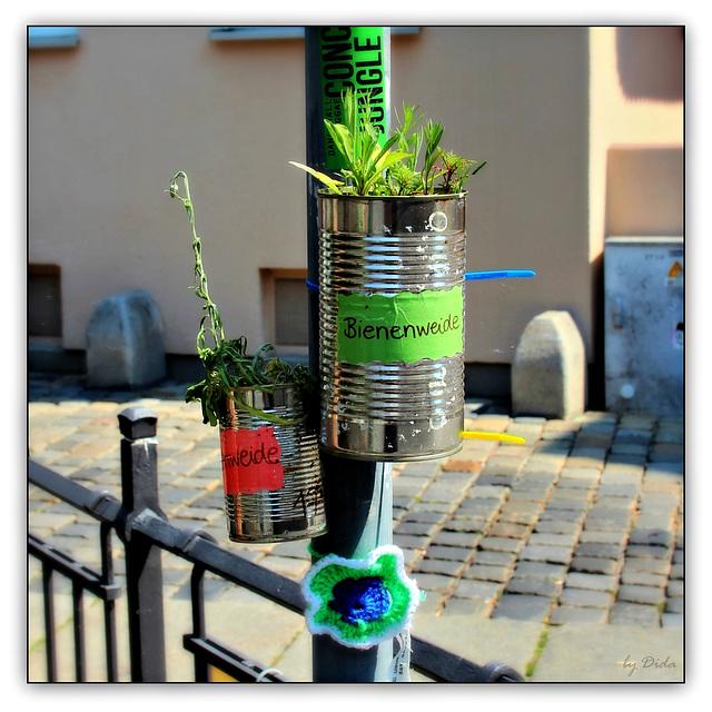 Guerilla Gardening...