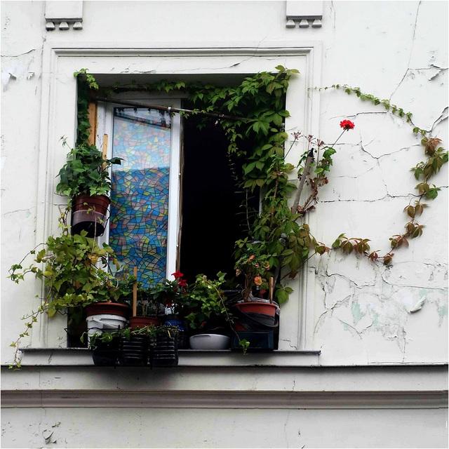 Fenêtre en ville