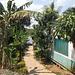 Trottoir et végétation / Acera entre la vegetación