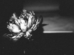 Ame frémissante dans sa solitude