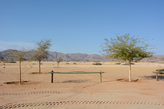 The Desert of Namib, Trees at Small Oasis of Solitaire