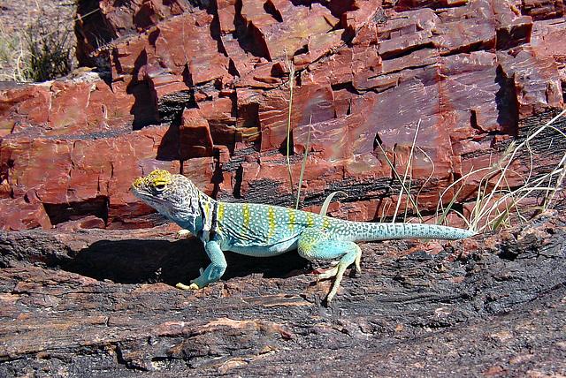USA - Arizona, Petrified Forest National Park