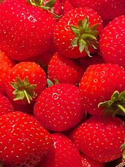 Erdbeeren im September DE