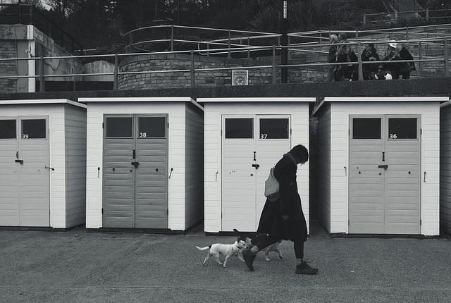 Lyme Regis XPro2 Seafront 17 mono