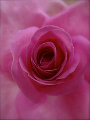 Un baisé sauté du bouquet.