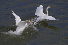 course poursuite sur la Saône