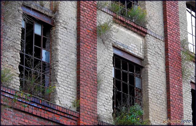 Natürlicher Fensterschmuck braucht Zeit