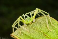 verde mas verde