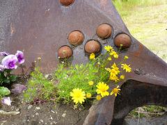 Blumengold in Goldbaggerschaufel