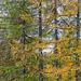 Foresta di Quadrella