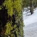 Quadrealla forest