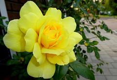 Mellow Yellow......
