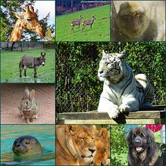 Journée mondiale des animaux / World animal day [ON EXPLORE]