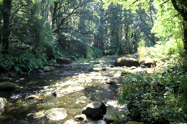 La rivière Ellé