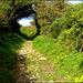 A path on Carn Marth
