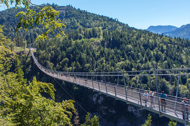 Bridge With (Some) Purpose