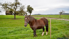 A lonely horse