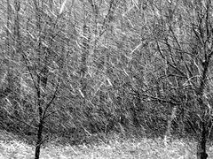 Wet Snowing