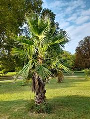 Palmier du Parc************