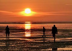 Wattläufer bei untergehender Sonne