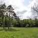 Moorwiese im Naturschutzgebiet - Blitzenreuter Seenplatte