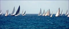 Genova : regata di settembre