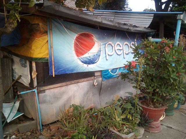 Pepsi botanique / Botanical Pepsi