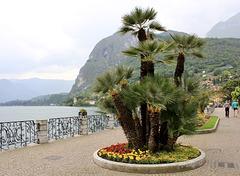 Seepromenade in Menaggio am Comer See
