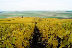 Vignes et champs Marne