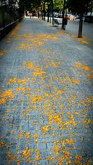 Un amarillo por el suelo