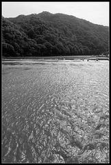 La forêt sur l'eau