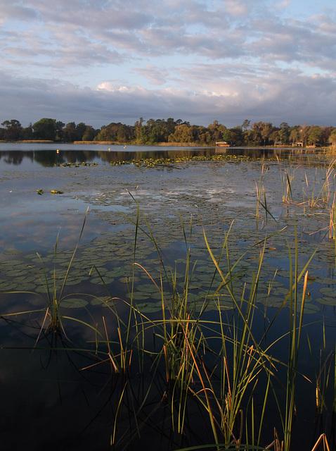 Lake Cecile's magical charms